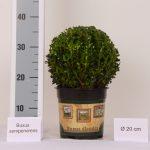 classic-pot-bol-20-cm