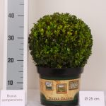 classic-pot-bol-25-cm