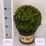 classic-pot-bol-25-cm-schuin