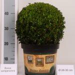 classic-pot-bol-28-30-cm
