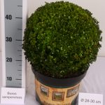 classic-pot-bol-28-30-cm-schuin