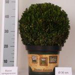 classic-pot-bol-30-cm