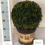 classic-pot-bol-30-cm-schuin
