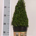 classic-pot-kegel-30-cm