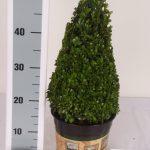 classic-pot-kegel-30-cm-schuin