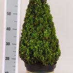 classic-pot-kegel-50-cm