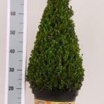 classic-pot-kegel-55-60-cm