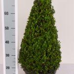 classic-pot-kegel-55-60-cm-schuin