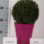 color-pot-bol-20-cm-roze