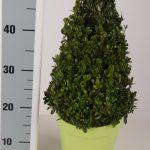 color-pot-kegel-30-cm-schuin-groen