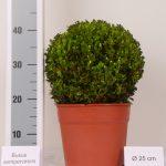 decopot-bol-25-cm