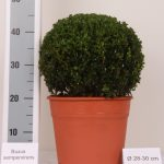 decopot-bol-28-30-cm