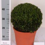 decopot-bol-28-30-cm-schuin