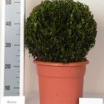 decopot-bol-30-cm