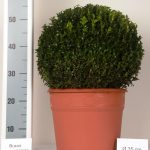 decopot-bol-35-cm