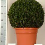 decopot-bol-50-cm