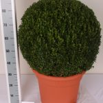 decopot-bol-60-65-cm-schuin