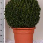 decopot-bol-70-cm