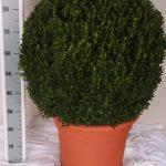 decopot-bol-70-cm-schuin