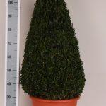 decopot-kegel-100-cm