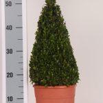 decopot-kegel-30-cm