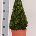 decopot-kegel-40-cm