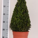 decopot-kegel-50-cm