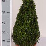 decopot-kegel-50-cm-schuin
