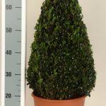 decopot-kegel-55-60-cm