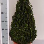 decopot-kegel-60-cm-schuin