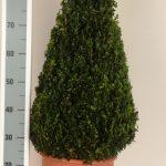 decopot-kegel-70-cm