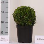 zwarte-pot-bol-20-cm