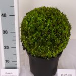 zwarte-pot-bol-25-cm-schuin