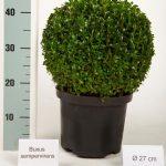 zwarte-pot-bol-27-cm