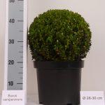 zwarte-pot-bol-28-30-cm