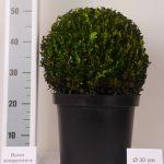 zwarte-pot-bol-30-cm