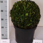 zwarte-pot-bol-30-cm-schuin