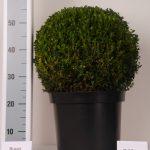 zwarte-pot-bol-35-cm