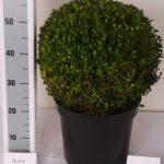 zwarte-pot-bol-35-cm-schuin
