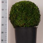 zwarte-pot-bol-40-cm