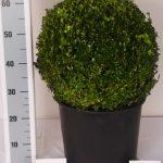 zwarte-pot-bol-40-cm-schuin