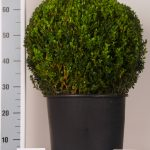 zwarte-pot-bol-45-cm