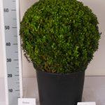 zwarte-pot-bol-45-cm-schuin