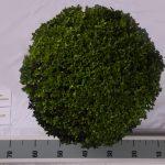 zwarte-pot-bol-45-cm-van-boven