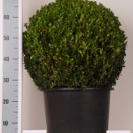 zwarte-pot-bol-50-cm