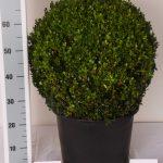 zwarte-pot-bol-50-cm-schuin