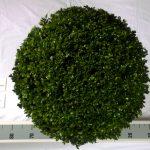 zwarte-pot-bol-50-cm-van-boven