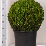 zwarte-pot-bol-55-cm