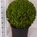zwarte-pot-bol-55-cm-schuin
