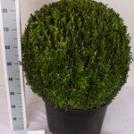 zwarte-pot-bol-60-65-cm-schuin